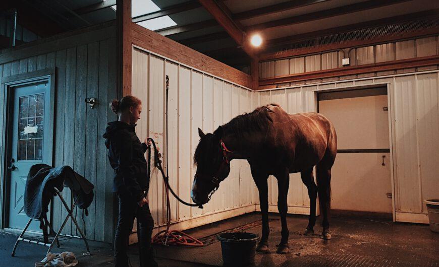 Sprzęt jeździecki – potrzebne wyposażenie dla każdego jeźdźca